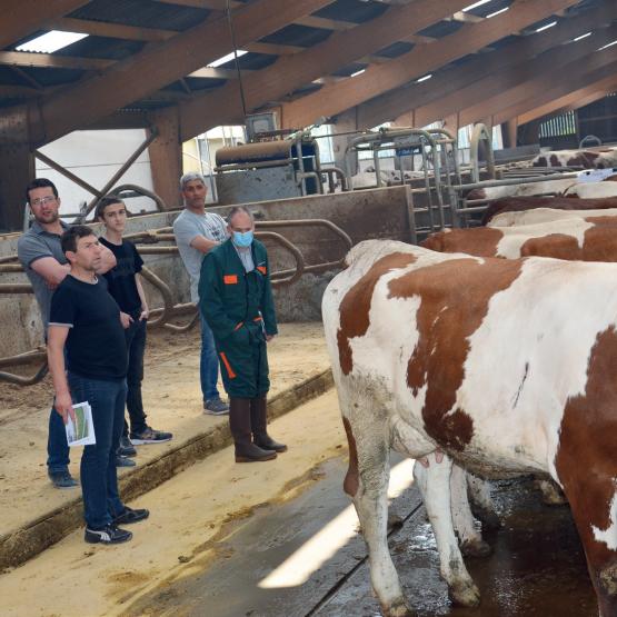 Pour la campagne 2021, la Haute-Marne compte 51 élevages ayant plus de 90 % de race Montbéliarde. Photo : DR